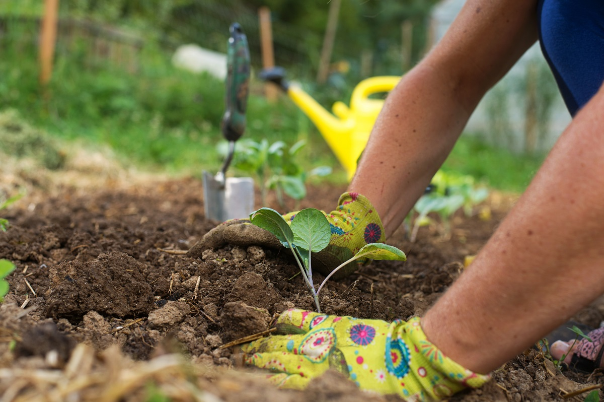 It's not too late to get your garden in!