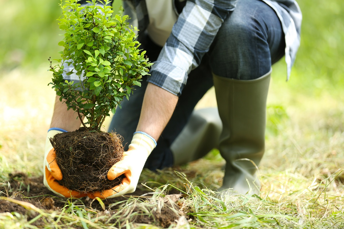 Planting Trees and Shrubs in the Summer