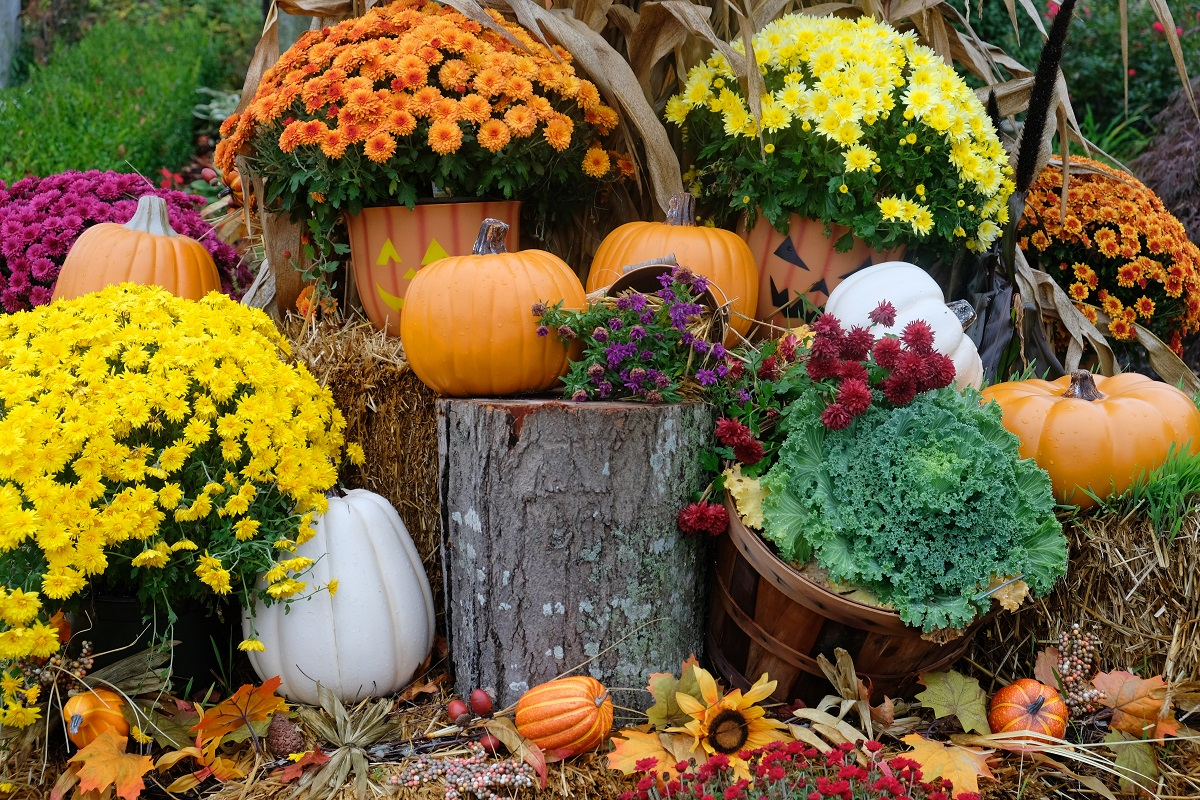 Spruce Up Your Yard For Fall